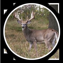 Deer & Game Fence